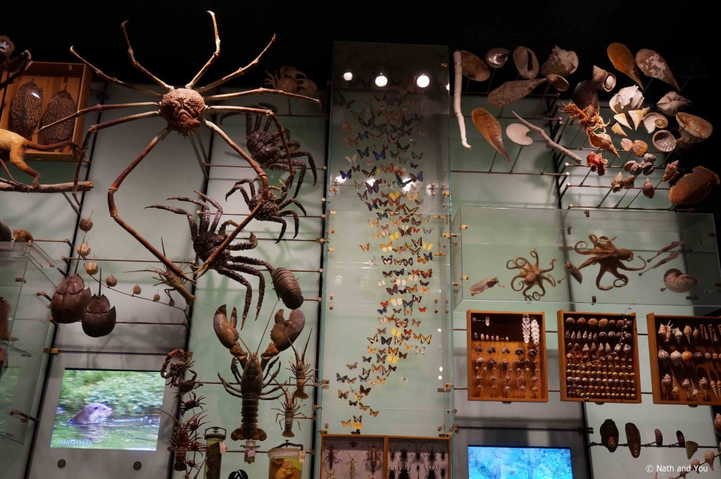 hall-biodiversite-musee-americain-histoire-naturelle-new-york-nath-and-you