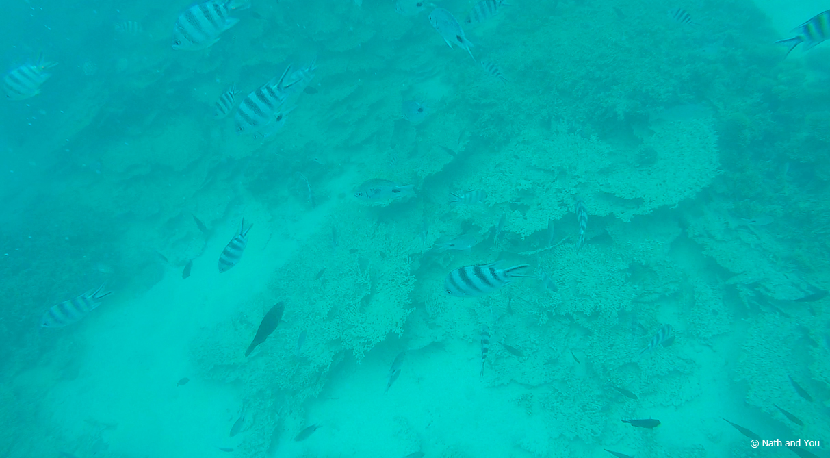 Snorkeling-Blue-Bay-Maurice-Nath-and-you