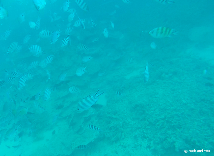 Snorkeling-Parc-Marin-Blue-Bay-Maurice-Nath-and-you