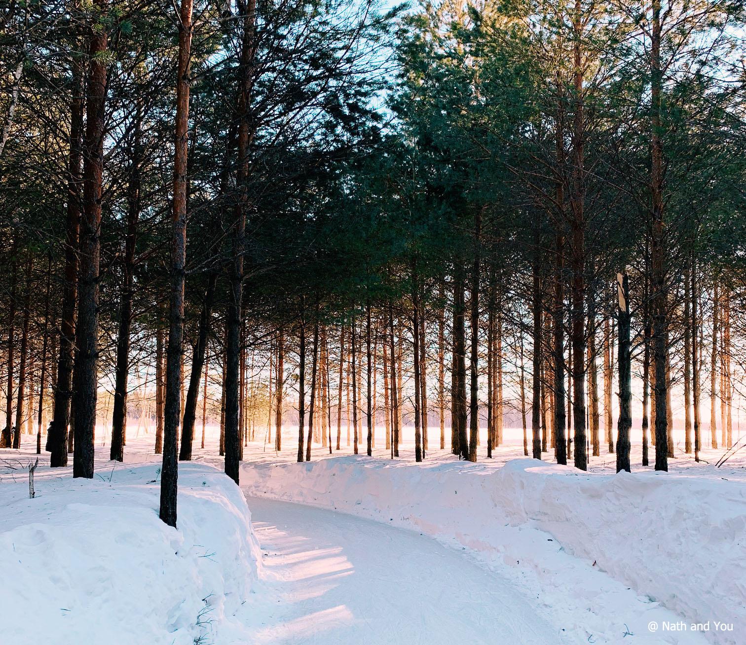 Patiner dans le Domaine de la Forêt Perdue